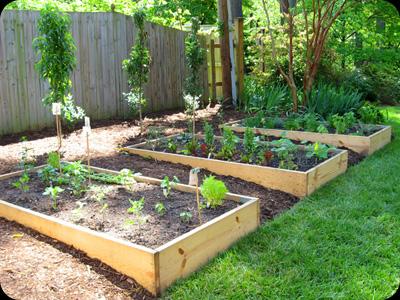 Fruits, Herbs & Vegetables
