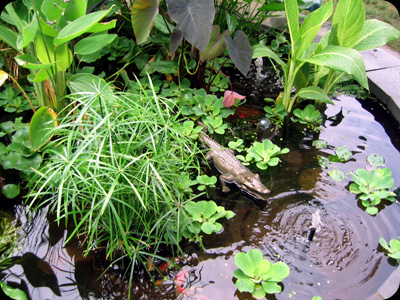 Design, Install, & Maintain Water Gardens